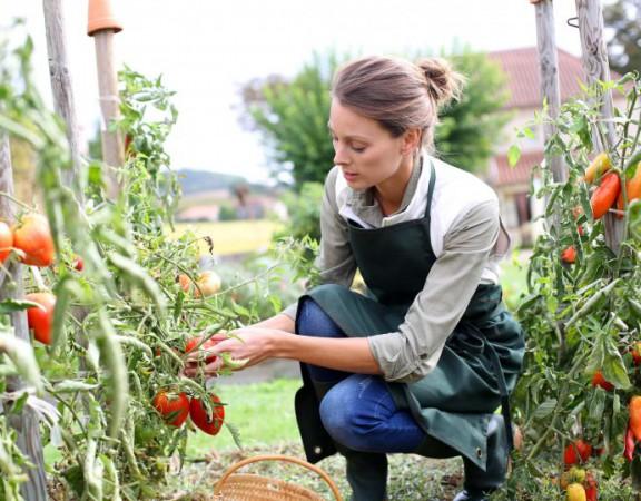 Repiquer-des-tomates-810x540